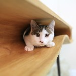 CATable: LYCS architecture teases the curiosity of felines with adventurous furniture