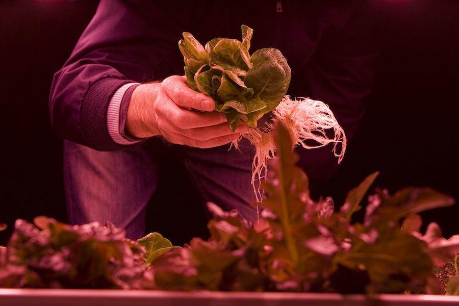 Growing Underground - Photo by Zero Carbon Food.