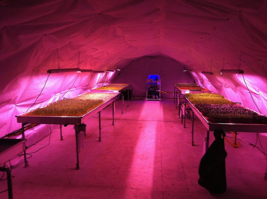 Growing Underground - Photo by Zero Carbon Food.