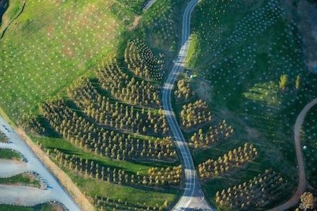 100 Endangered Forests
