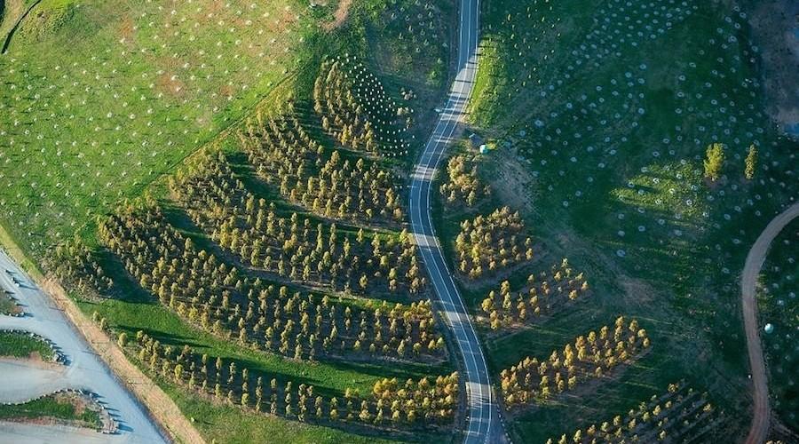 TCL_Canberra Arboretum_John Gollings 03_smaller