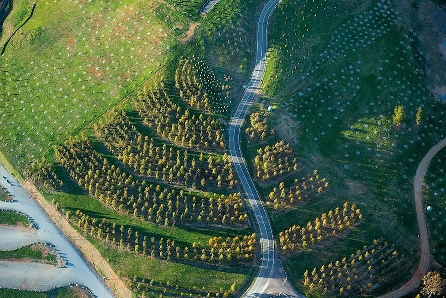 The National Arboretum by TCL in Canberra, Australia. The layout of the trees are distinct for each forest and are designed based on their botanical or cultural qualities for each species. Each TCL designer provided ideas for the 100 forests, with the result of a patchwork of ideas. Photograph by John Gollings.