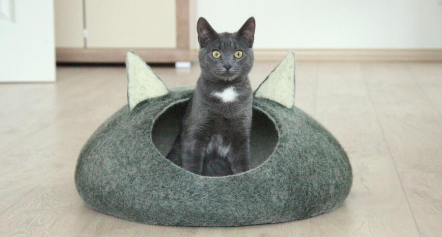 cat 05