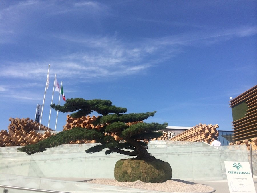 Japan Pavilion at Milan Expo 2015 - Photo by Enrico Zilli.