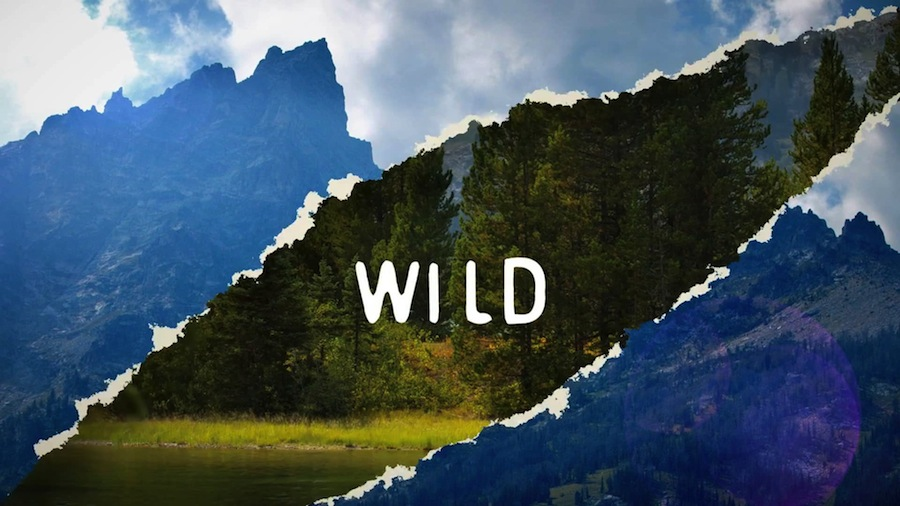 Wild - Maison & Objet design trend official video.