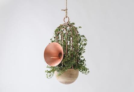 Urban bird nest