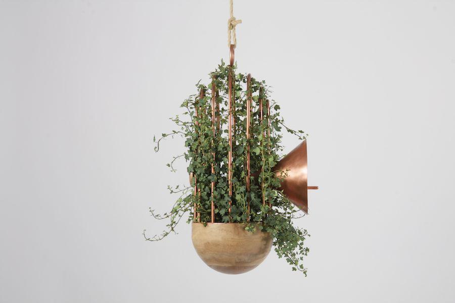 Orator Urban bird nest