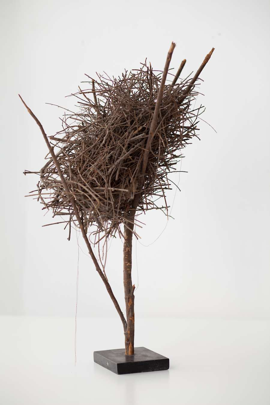 Nest of the Jordan sparrow that inspired the Life Object installation - Courtesy of Israel Pavilion.