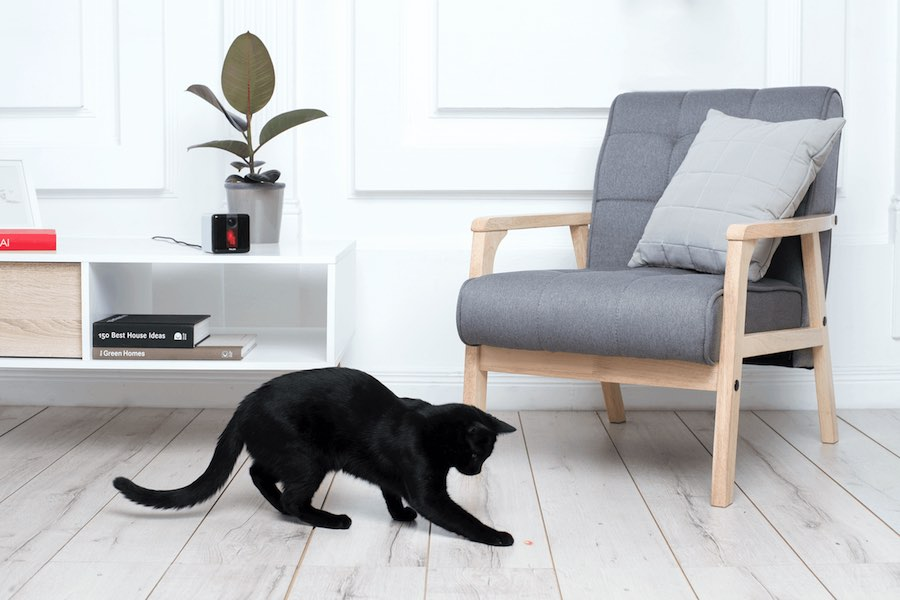 Cat-friendly designs - © PetCube.