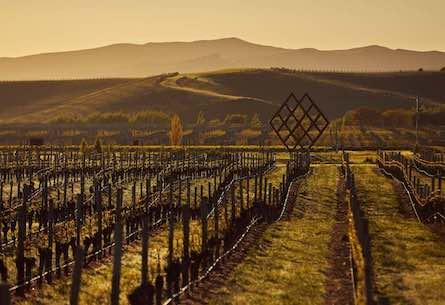 Raising above the vineyards