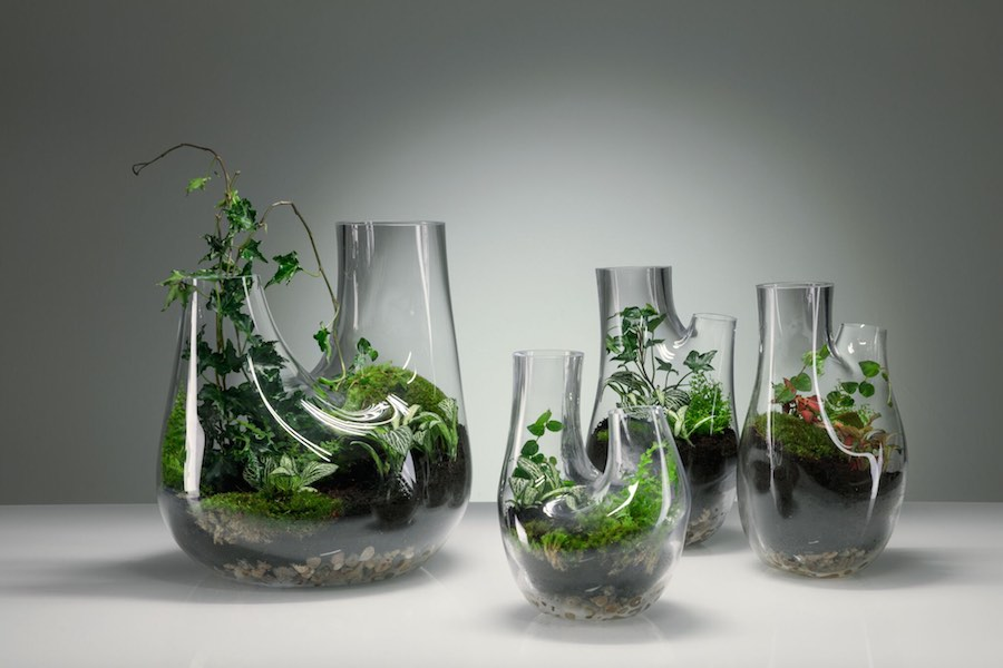 PLANT terrarium by Tom Dixon - Courtesy of Tom Dixon