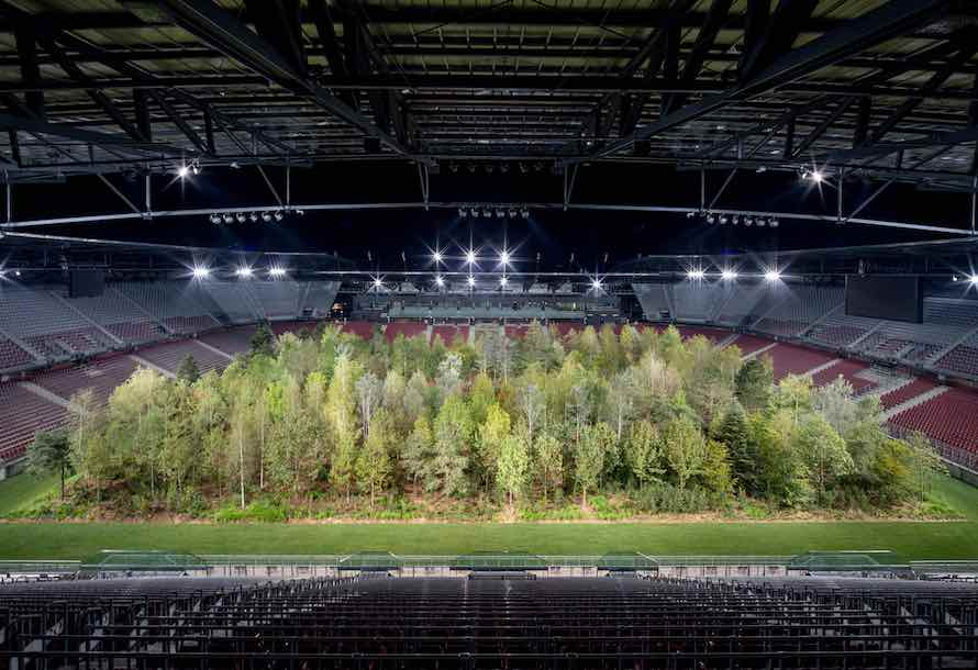 The forest in the stadium