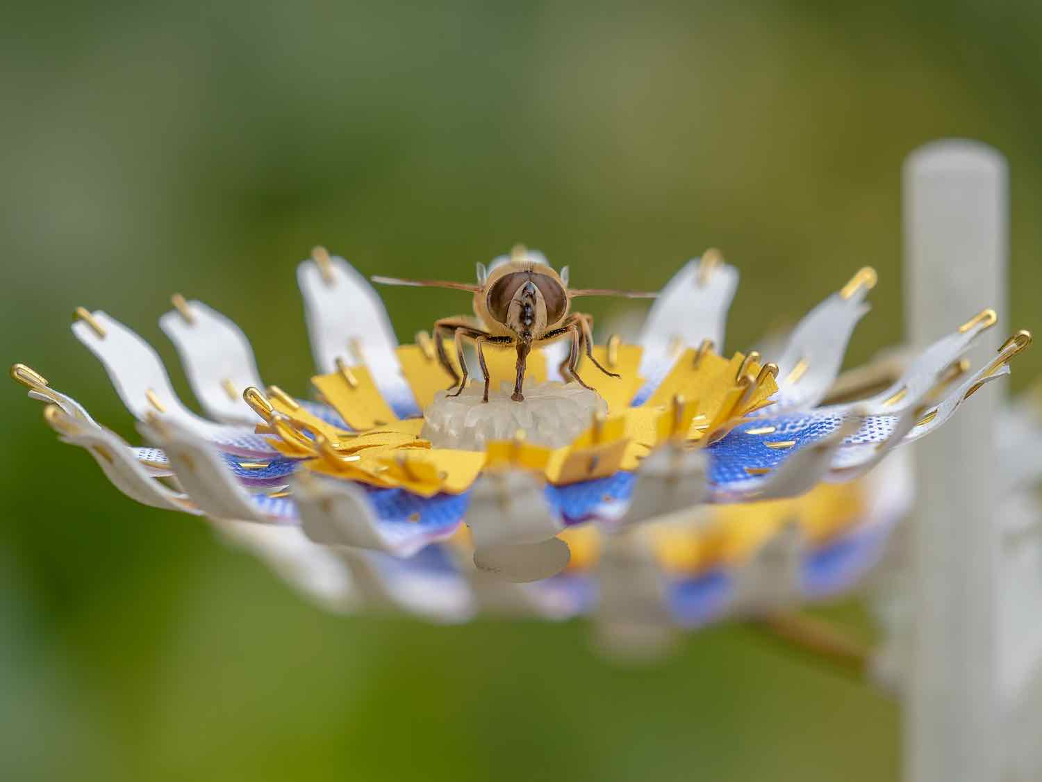 Insectology: Food for Buzz - Photo by Atelier Boelhouwer.
