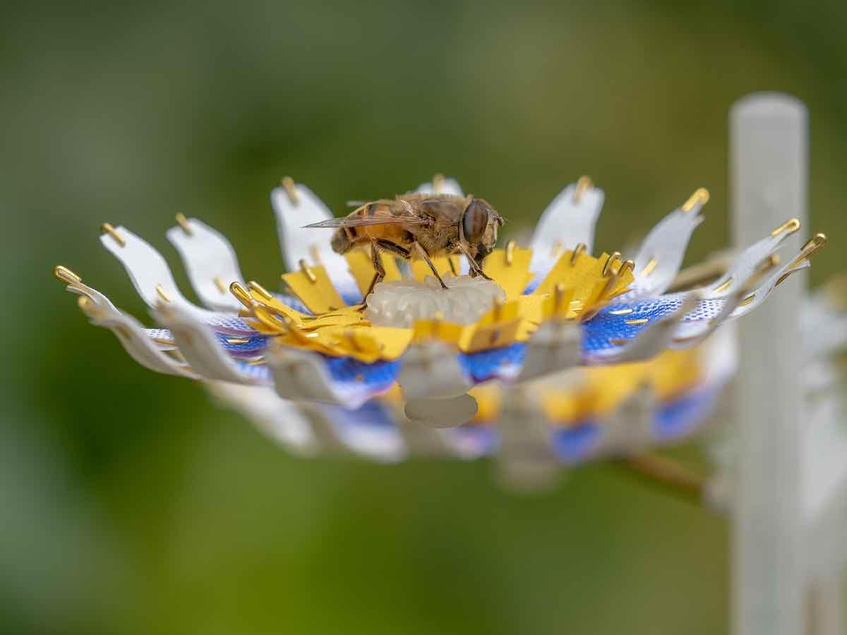 Insectology - Food for Buzz by Atelier Boelhouwer - Bee flower - Photo by Janneke van der-Pol