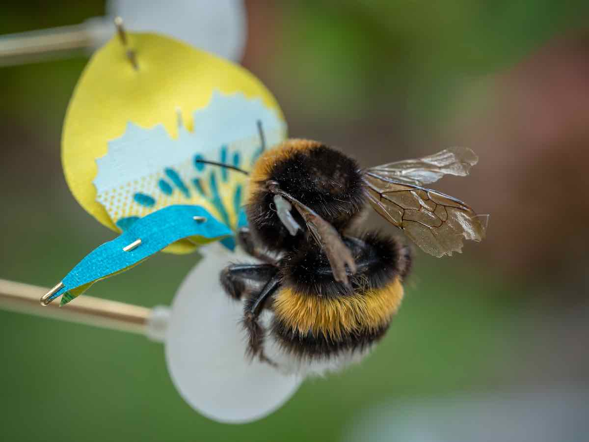 INSECTOLOGY - FOOD FOR BUZZ by Atelier Boelhouwer - Bumblebee flower - Photo by Janneke van der Pol.