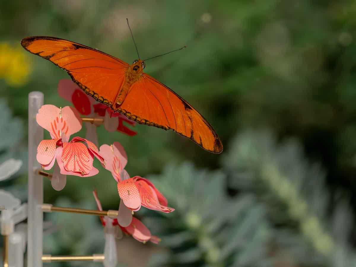 Insectology - Food for Buzz by Atelier Boelhouwer - Butterfly flower - Photo by Janneke van der-Pol