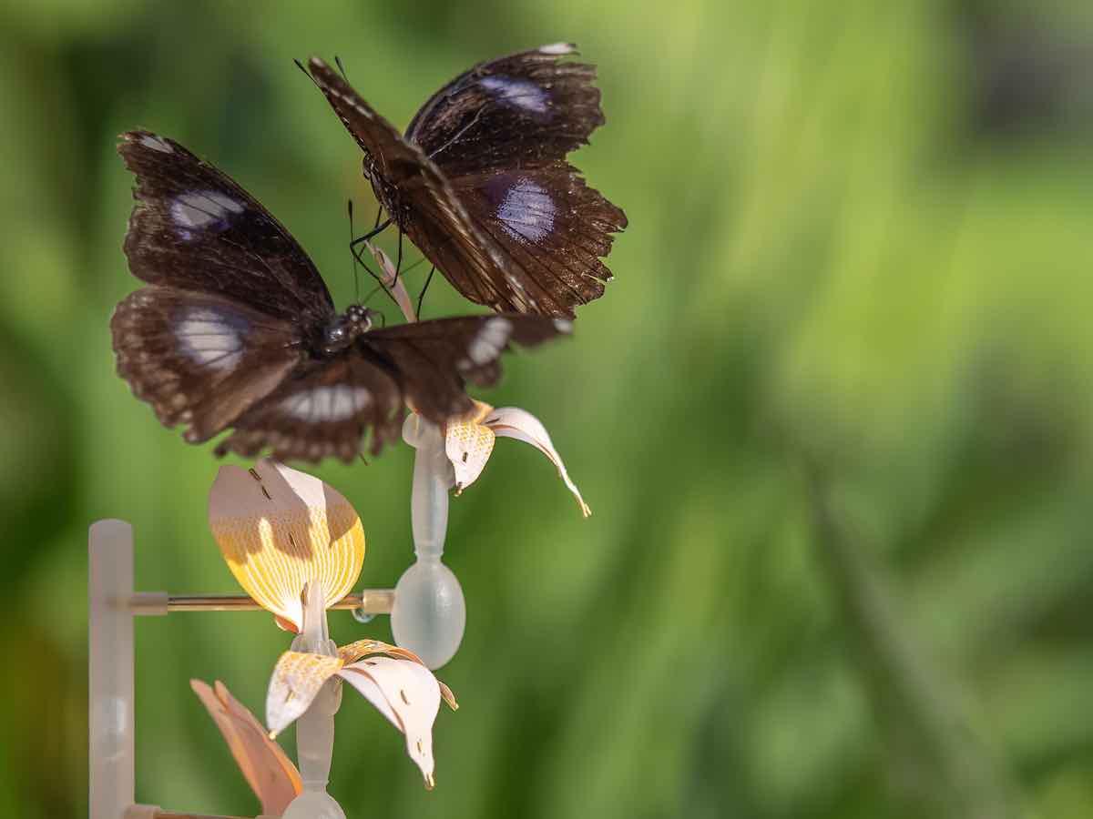 Insectology - Food for Buzz by Atelier Boelhouwer - Moth flower - Photo by Janneke van der-Pol