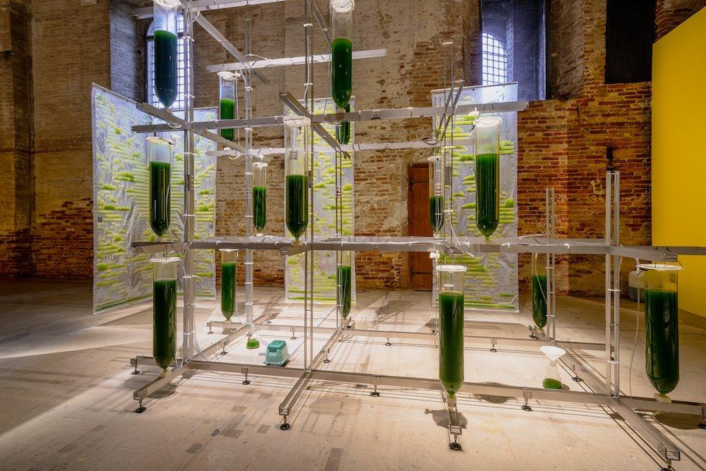 ecoLogicStudio @ Venice Architecture Biennale 2021 - Photo by Andrea Avezzù.