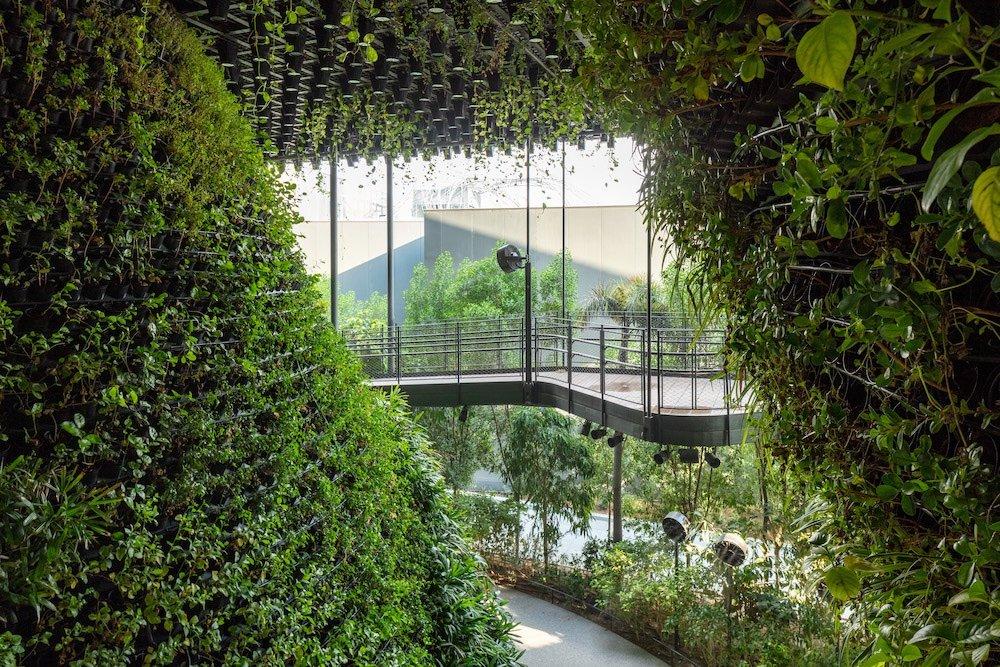Singapore Pavilion @ Dubai Expo - View of Canopy Walk - © Singapore Pavilion
